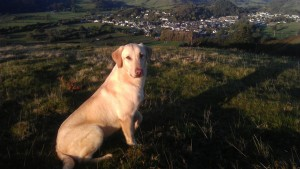 Rimrock Rico on his first evening in Machynlleth