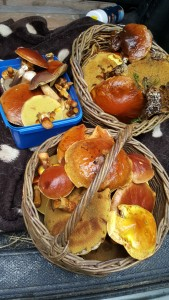 Slippery Jacks and assorted boletes